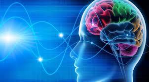 Resultado de imagen de Funcionamiento del cerebro humano