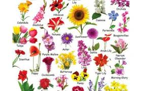 Flowers Names Start With A Flower Chart Each Flower