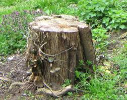 how to remove tree stumps without chemicals or tools permaculture
