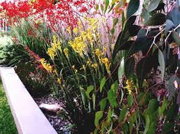 Small Picture Waterwise plant schemes WILD ABOUT GARDENS Garden Design Perth WA