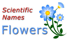 Scientific Names Common Flowers Checkall In