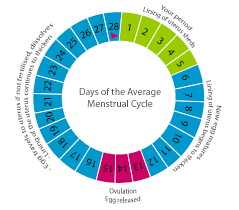 Period Cycle Chart The Three Phases In Menstrual Cycle Of A Woman