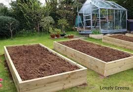 starting a new vegetable garden from