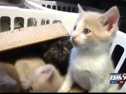 Inmates take care of kittens as part of rehab