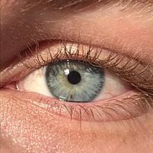Iris Color Chart Eye Color Wikipedia