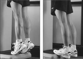 Image result for standing heel raise exercise image