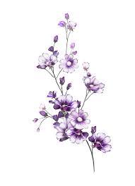 F 28png в 2019 г гербарий рисунки цветов татуировка цветы и