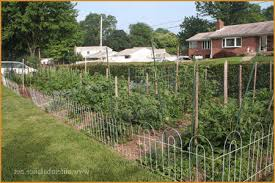 garden electric fence. Electric Fence To Keep Deer Out Of Garden » Really Encourage Spring Gardening Fencing