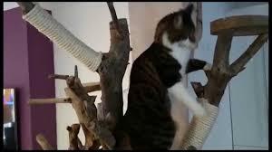 wall mounted cat tree thor scandicat. Modern Cat Tree Wall Mounted Thor Scandicat M