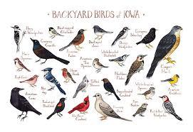 Amazon Com Backyard Birds Of Iowa Field Guide Art Print