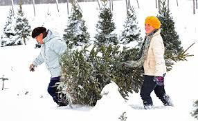 Where to cut down your own Christmas tree in Upstate NY (interactive map) |  NewYorkUpstate.com