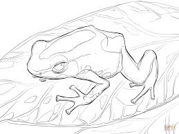 Small Picture Dyeing Dart Frog coloring page Free Printable Coloring Pages