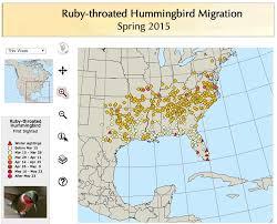 2017 Hummingbird Migration Chart Hummingbird Food Recipe The Infinite Spider