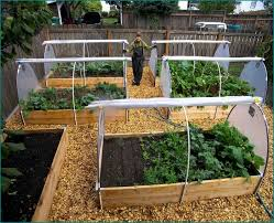 Small Picture Wonderful Box Gardens Ideas Boxes Open Vegetable Gardening S