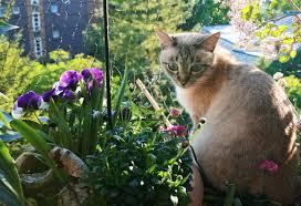 Gefahren Im Haushalt So Schützen Wir Unsere Thaikatzen Cattery