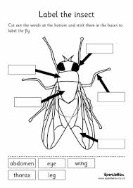 wpc2fed5cf_05_06 minibeasts activities and games for eyfs & ks1 sparklebox on instructions worksheet ks1