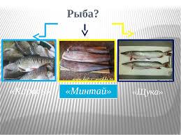 Проект по технологии Рыба в кляре  слайда 10 Рыба Карась Минтай Щука