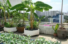 Small Picture Creative ideas to make your balcony garden more attractive