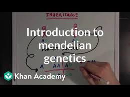 Mendelian Genetics Chart An Introduction To Mendelian Genetics Video Khan Academy