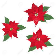 Red Christmas Flower Poinsettia On White Vector Set