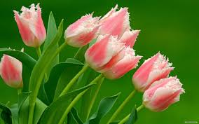 beautiful flowers nature wallpaper hd 12 widescreen beautiful nature flowers il with pictures in hd images