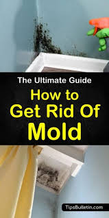 get rid of mold house cleaning tips