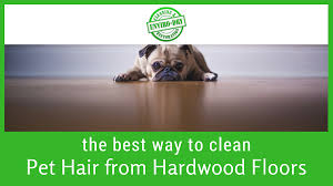 the best way to clean pet hair from hardwood floors featured image