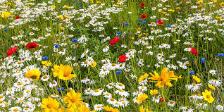 Gardening Tips - How To Garden and Landscape
