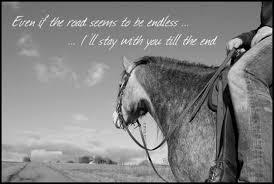 Bild Zitat Zitate Pferde Englisch