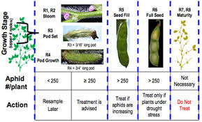 Soybean Aphid Pests Soybean Integrated Pest Management