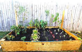 how to start a small garden. How To Start A Vegetable Garden In Your Backyard Design Best Ideas About Landscaping Along Fence Small H