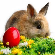 Free Download Easter iPad Wallpapers ...