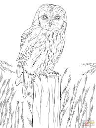 Small Picture Tawny Owl coloring page Free Printable Coloring Pages