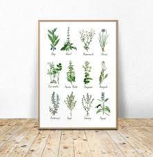 Botanical Chart Print Printable Kitchen Art Printable Botanical Chart Herbs And
