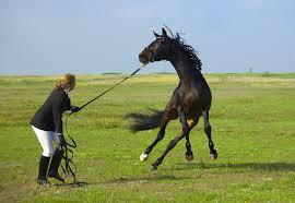 Straffen En Corrigeren Van Je Paard Nodig Of Nietarlene Jansen