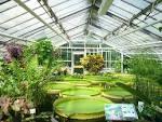 Images & Illustrations of botanical garden