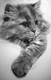 realistic cat drawing in pencil. Contemporary Pencil Image Credit Paul Lung  Cats Pencil Drawings Photorealism And Realistic Cat Drawing In Pencil C