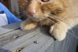 kat kwijlt bij aaien