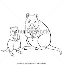 Small Picture Quokka RF Shutterstock