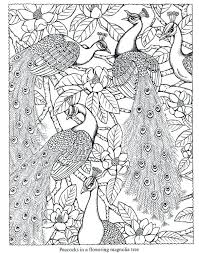 Coloring Pages Advanced Peacock Coloring Pages Bo Advanced Peacock