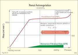 Gfr Rate Chart New Human Physiology Ch 25