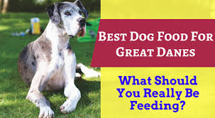 Great Dane Puppy Food Talk What Is The Best Food For Great