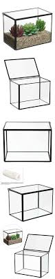 Decorative Display Cases Inch Clear Glass Rectangular Succulent Terrarium Box Decorative