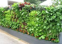 vertical vegetable garden ideas amazing salad vertical gardens diy vertical vegetable garden planters