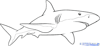 great white shark coloring pages great white shark coloring pages free printable shark coloring pages great