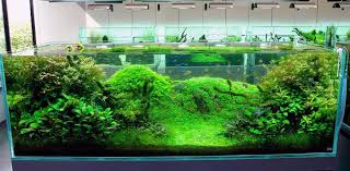 Turtle Tank Decor Fish Tank Ideas Cool Fish Tank Decoration Ideas Outstanding