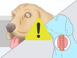 3 Ways To Determine Benadryl Dosage For Dogs Wikihow