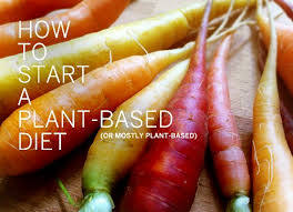 Plant based diet essay