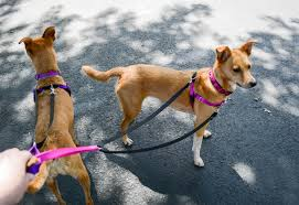 2 Hounds Design Zoephee Freedom Harness Review