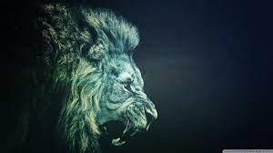 Wallpaper Hd Lion Black And White - HD ...